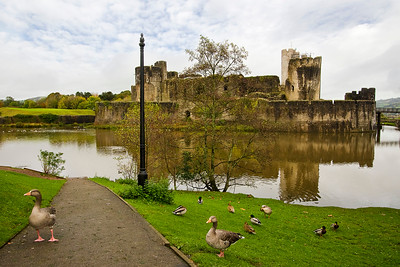 Ducks at Caerphilly Castle, South Wales