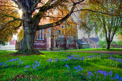 St Mary's Priory Church Monmouth bluebells view