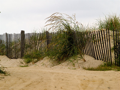 Cape May Point, NJ. Dune
