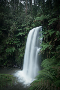Ferns & Falls || Great Otway National Park
