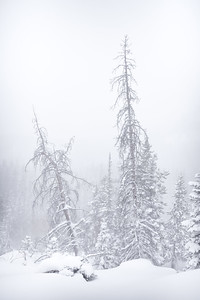 Whiteout || Rocky Mountain National Park