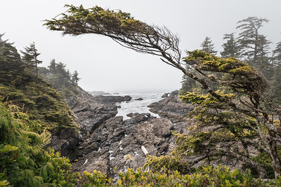 Wild west coast of Vancouver Island ... Ucluelet