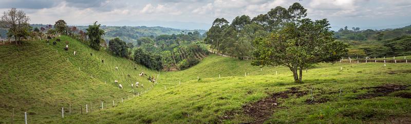 Rolling hills ... Filandia ... Colombia