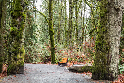 Forest bench ... Goldstream National Park ... Vancouver Island