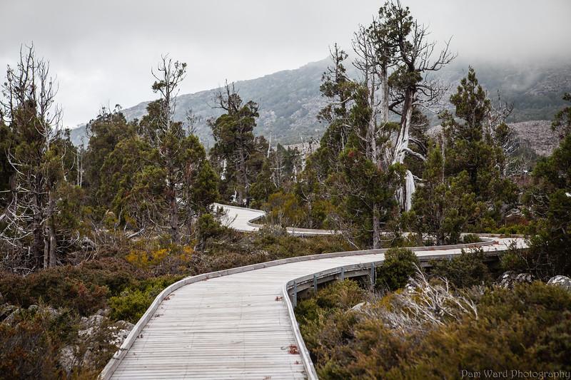 Pine Lake Tasmania
