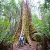 Tall Trees Tasmania