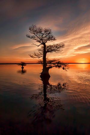 A Typical Blue Cypress Lake Sunrise