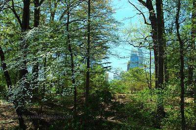 Symphony Tower (1180 Peachtree) Atlanta, GA