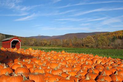 Pumpkins; Vermont