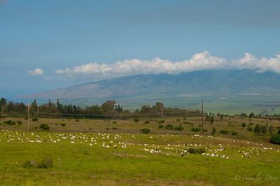debut de la route pour monter sur le volcan Haleakala
