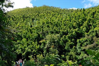 qui nous ammene à la foret de bambou (bamboo forest)...superbe!