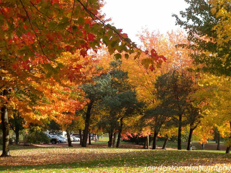 Maple Trees Turning