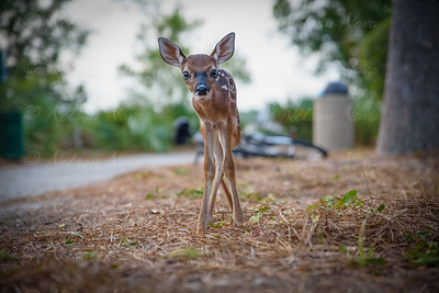 Lonely Fawn