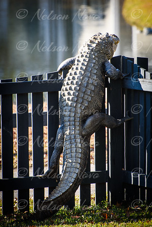 Alligator Climber 2