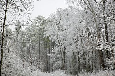 2MPhotos-2018 - Snow-32936