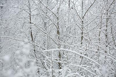 2MPhotos-2018 - Snow-32978
