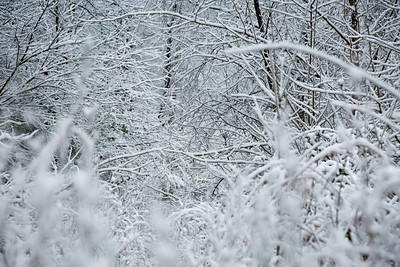2MPhotos-2018 - Snow-32974
