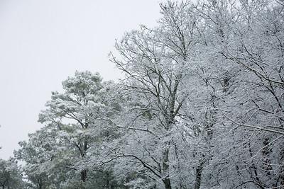 2MPhotos-2018 - Snow-32993