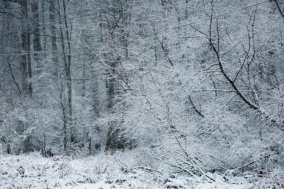 2MPhotos-2018 - Snow-33036