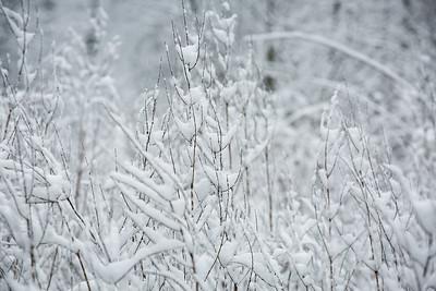2MPhotos-2018 - Snow-32981