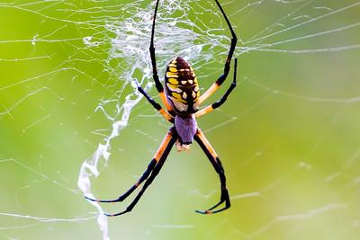2018-Spider-8006
