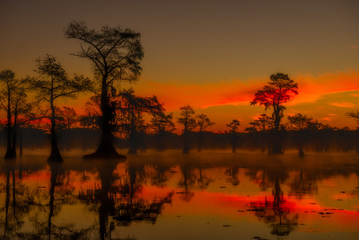 Dawn on the Bayou