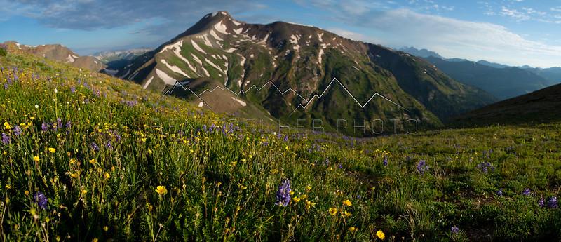 Wildflowers on Cinnamon Mountain, Elk Range, CO