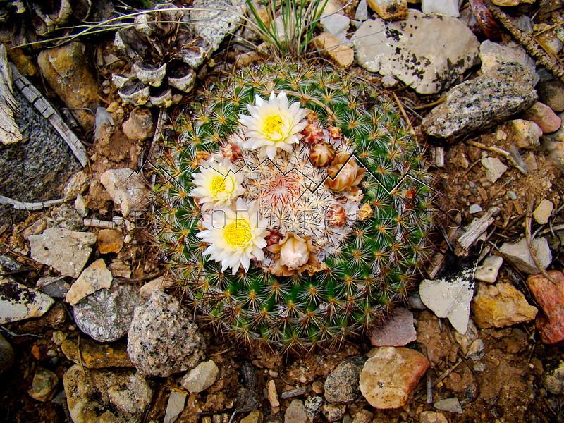 Cactus in Deep Creek, CO