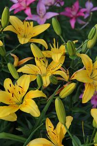 Flowers in Wisconsin