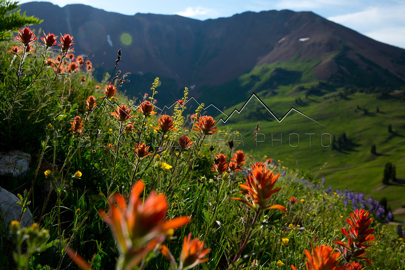 Wildflowers outside of Crested Butte, CO.