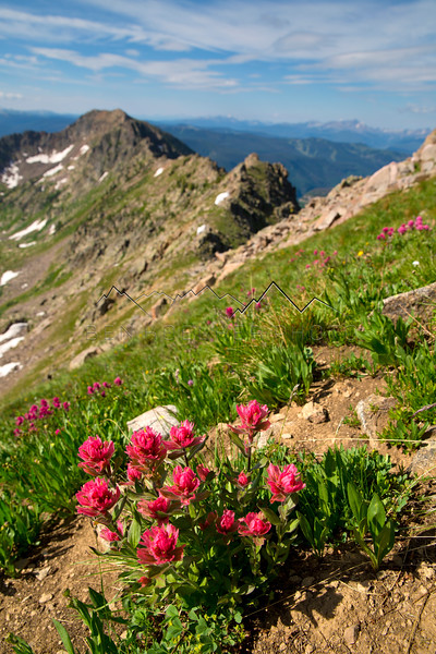 Flowers on the ridge of West Partner Peak, looking across at Vail, CO