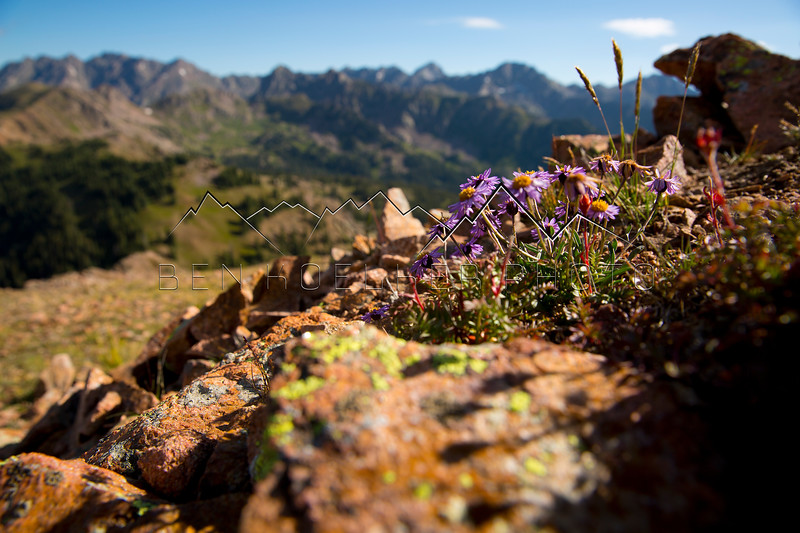 Flowers on the summit of Bald Mountain, CO