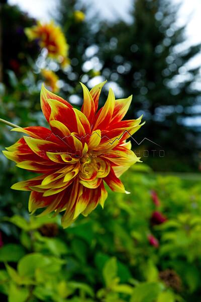 Flowers near Arrowhead, CO