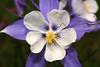 Flower along West Lake Creek, CO