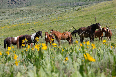 Horses along the Trough Road, Kremmling, CO