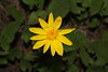 Flower along East Lake Creek, CO