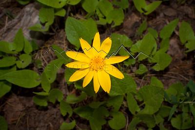Beautiful Yellow Flower, CO