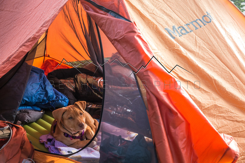 Scout lounging near Missouri Lakes, CO