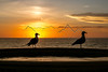 Birds on the Deck at Sunset, Surf Colony, Mexico