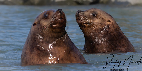 Sea Lion Secrets