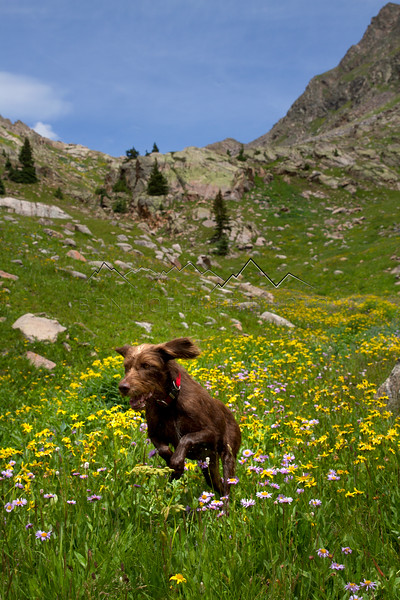 Lewis runs amok in the Gore Range, CO