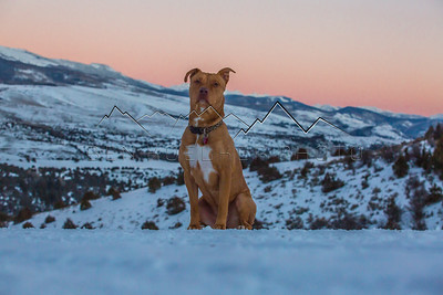 """Scout the Wonderdog"" at sunset in the Gore Range, CO"