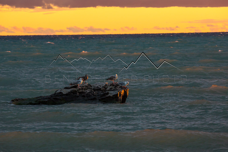 Birds at sunset on Lake Michigan