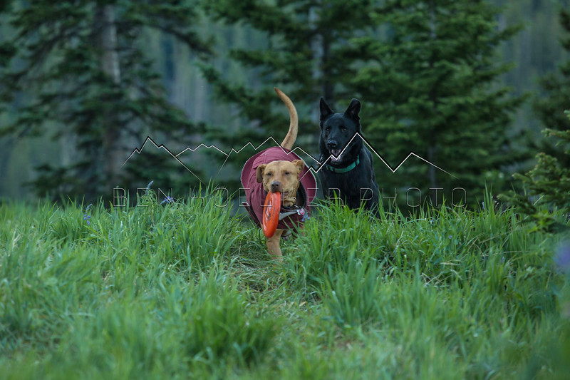 Scout and Tybee in the Mountains!!!