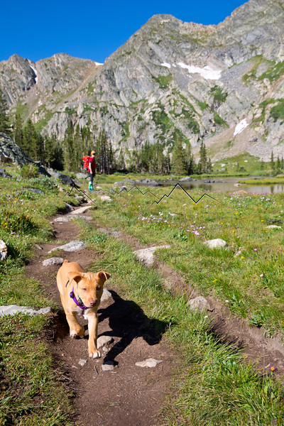 Scout on the trail, Missouri Lakes, CO