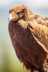 Bird of Prey, Gore Range, CO