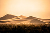 Mesquite Dunes by andy morris