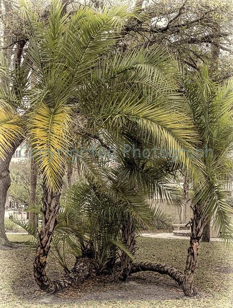 Split Palms