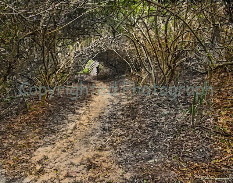 Beach Access<br />  St Augustine, Florida