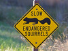 Endangered Squirrel Sign